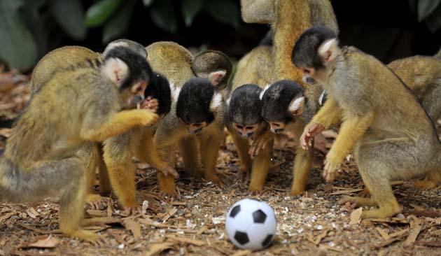 Crees que matarás el mono del futbol y además harás deporte.